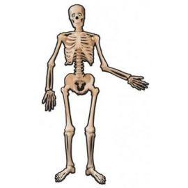 Esqueleto carton 140 cm
