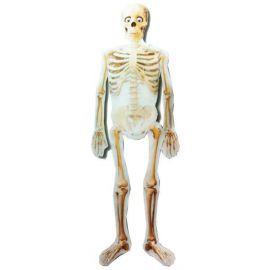 Globo helio gigante esqueleto