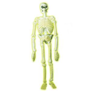 Esqueleto plástico 150 cm.