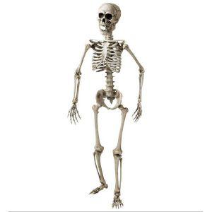 Esqueleto laboratorio 1,60cm