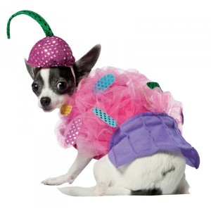 disfraz-cupcake-para-perros