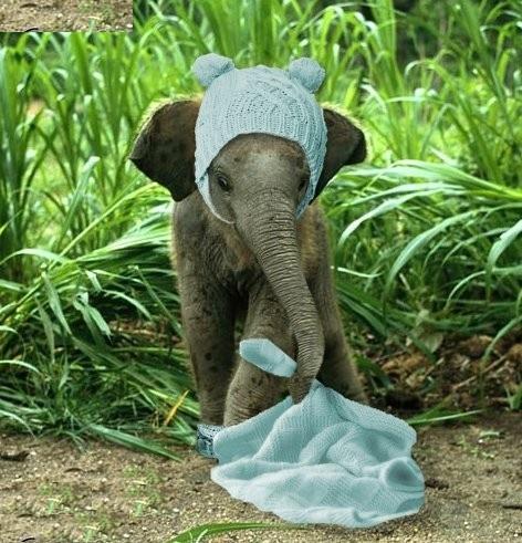 Disfraces archives el blog de barullo companyel blog de - Fotos de elefantes bebes ...