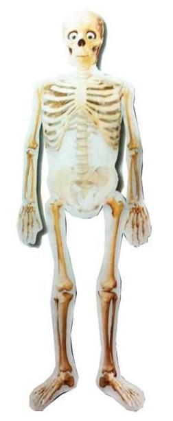 globo-helio-gigante-esqueleto