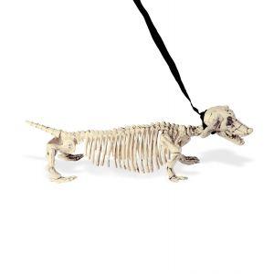 Perro tejon esqueleto
