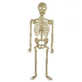Esqueleto 32 cm