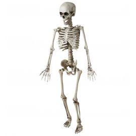 Esqueleto articulado 120cm