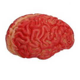 Cerebro tamaño real