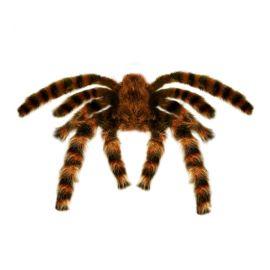 Tarantula gigante peluda 65cm